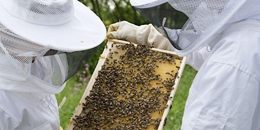 Introduction to Beekeeping Community Class