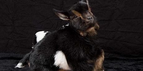 Goat's Gym - Goat Yoga tickets