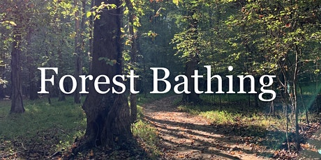 Serenbe Forest Bathing Wellness Walk tickets