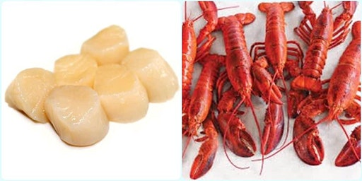 Live Maine Lobster & Scallops straight from the coast to Seneca