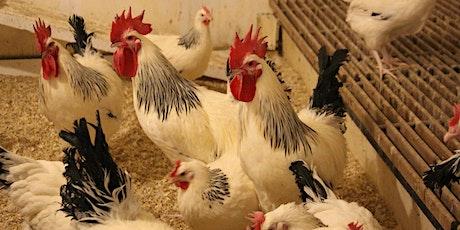 U of A Heritage Chicken Program + Peavey Mart Small Flock Workshops tickets