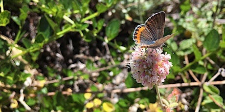 SPEAKER SERIES: A New Approach to Measuring San Francisco's Biodiversity tickets