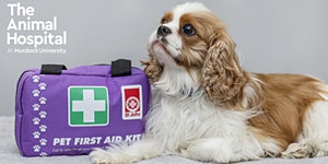 Pet First Aid Workshop