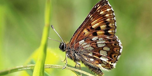 Volunteer Habitat Management Day with Butterfly Conservation