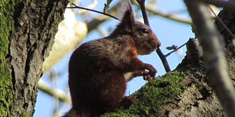 ** CANCELLED** Squirrel and Woodland Walk tickets