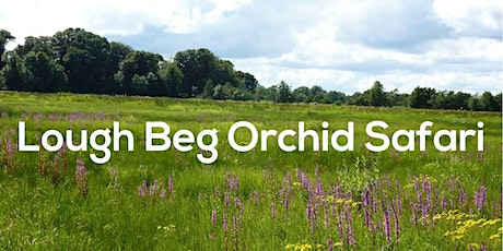 Lough Beg Orchid Safari tickets
