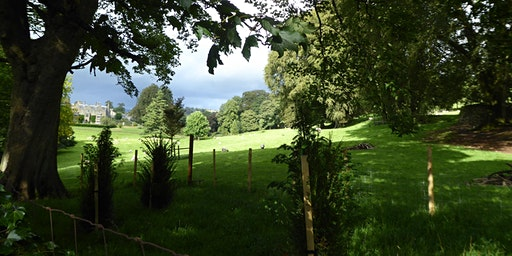 TALK:  Trees and Woods of the Dales