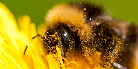 Nature Course: Bumblebees - An Introduction tickets
