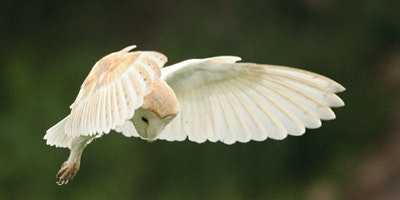 Nature Course: Barn Owls