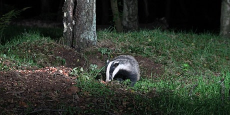 Badger Watching at Gosforth Nature Reserve tickets