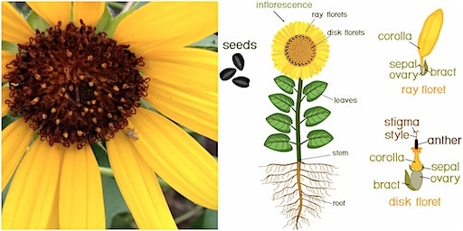 Botany from the Ground Up: Plant Parts