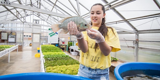 Aquaponics Greenhouse Tour - 100 Gardens