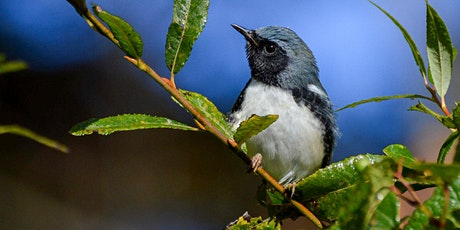Public Program: Discover the Important Bird Areas and Birding Trails of MI tickets