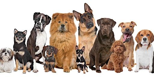 Buddy's Doggie Social