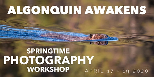 Algonquin Awakens  - Springtime Photography Workshop with Two Local Guides!
