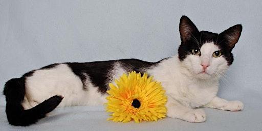 Cat TLC Volunteer Training