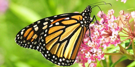 Science Matters Brown Bag Lunch and Learn; Monarch Butterfly Conservation  tickets