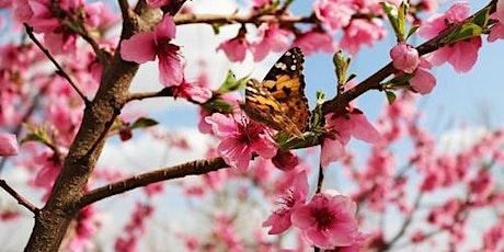 Spring Self-Care Urban Meditation Retreat with Consciousness Explorers Club tickets