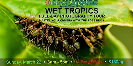 Wet Tropics Full-Day Photography Tour 2020 tickets