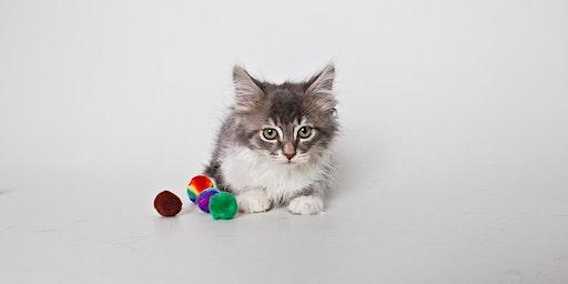 Kitten Foster Orientation