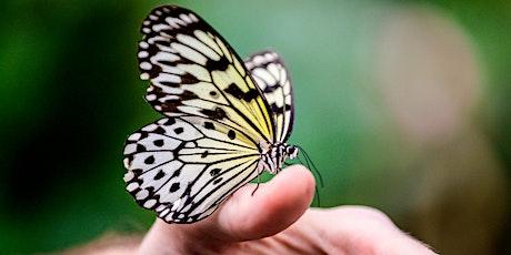 Shutterbugs & Butterflies tickets
