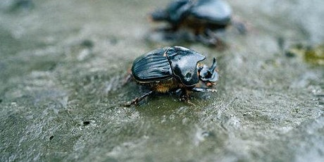 Dung Beetles in West Gippsland tickets