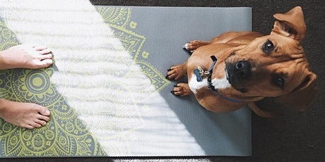 Yoga with your dog tickets