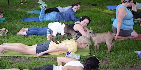 Goat Yoga! - Sunday 9/13 | 6:15pm - 7:15pm | tickets