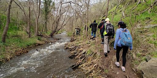 Ranger guided gorge hike