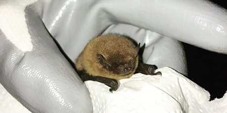 Bat night at Carnlough Harbour  tickets