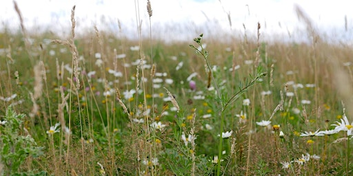 GUIDED WALK with Nick Gray of DORSET WILDLIFE TRUST