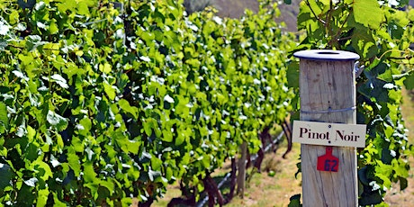 Exploring Pinot Noir from around the World tickets