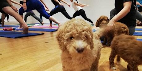 Puppy Flow Yoga tickets
