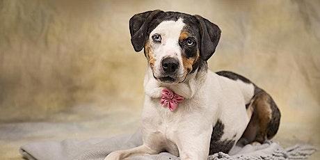 Dog Foster Orientation tickets
