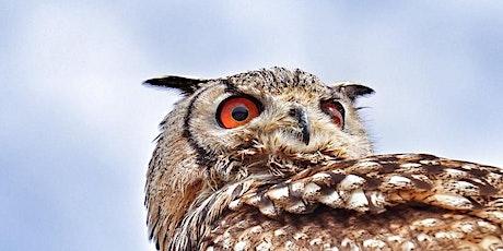 J'ai RDV avec la Biodiversité : aujourd'hui, la vie la nuit billets