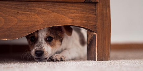 Fearful Dog Volunteer Seminar tickets