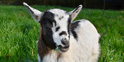 """Get Your """"Goat"""" On: Mental Wellness Social Work Event"""