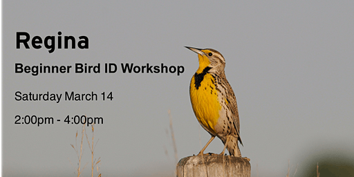 Regina - Beginner Bird ID Workshop