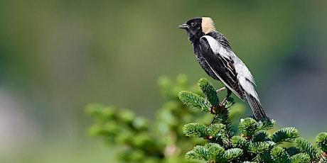 Birdwatching at Fauna / Observation d'oiseaux chez Fauna billets