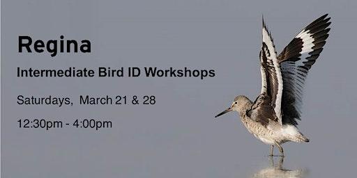 Regina - Intermediate Bird ID Workshop series