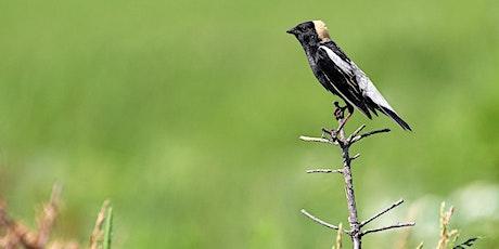 Birdwatching at Fauna / Observation d'oiseaux chez Fauna tickets