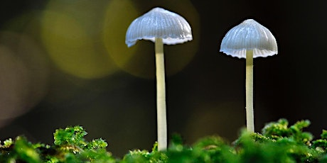 Festival of Fungi: An introduction to the Kingdom Fungi tickets