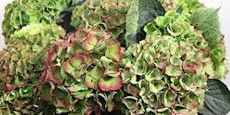 Autumn Hydrangea tickets