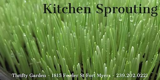 Kitchen Sprouting I