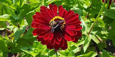 Grow Your Own Pollinator Garden tickets