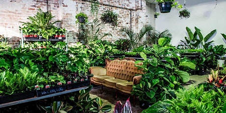 Gold Coast - Huge Indoor Plant Sale - Air Purifying Party tickets