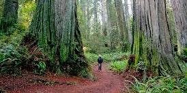 Troop 14 - Portola Redwoods Car Camping