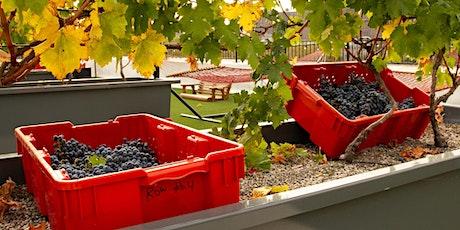 Viticulture Classes - Class Eight: Harvest Class & BBQ Lunch tickets