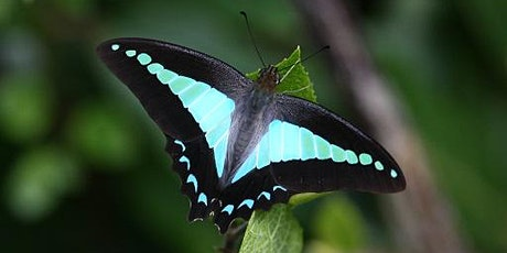 Butterflies: the birds of the insect world - conservation and management tickets