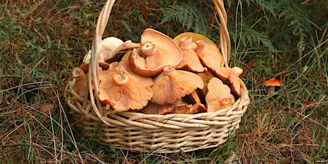 Easter Wild Mushroom Hunt - EVENT CANCELLED COVID-19 tickets